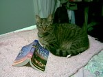 Manda Collins cat Tiny loves reading romance novels.