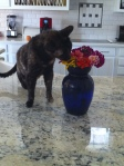 Carey Baldwin's cat Tigger stops to smell flowers.  Isn't she cute?