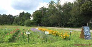 Flowers on farm